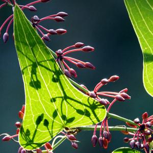 L'aide par les plantes