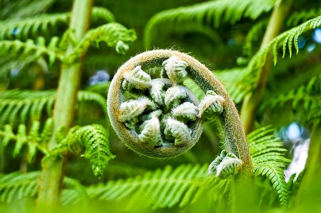 esprit plantes